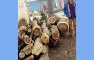 চান্দিনায় এসিল্যান্ডের জটিকা অভিযান! সরকারী গাছ উদ্ধার মেম্বারের বিরুদ্ধে মামলা