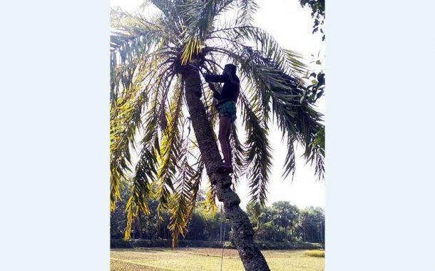 """কুমিল্লায় খেজুরের রস সংগ্রহে ব্যস্ত """"গাছিরা"""""""